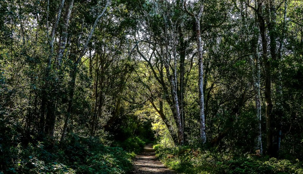 Witfontein forest hiking trail