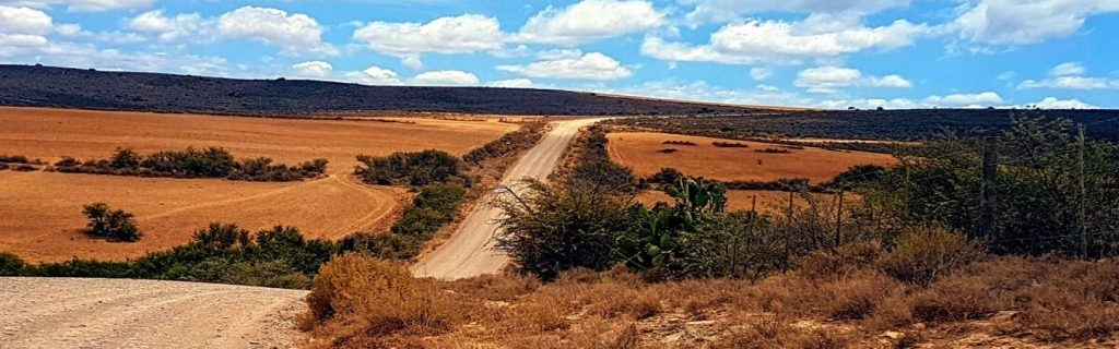 Karoo-road-to-oudtshoorn